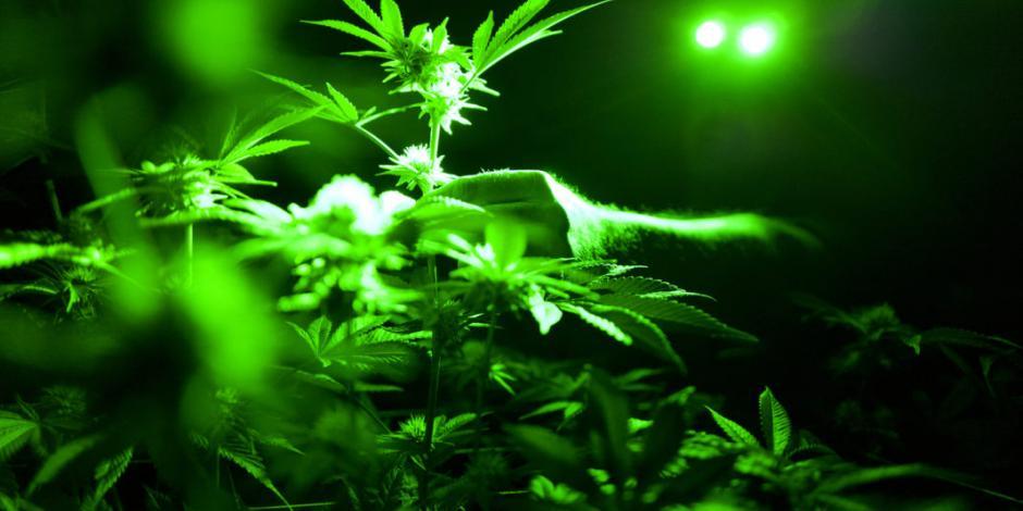 Descubren evidencias de hace 2 mil 500 años de uso de mariguana