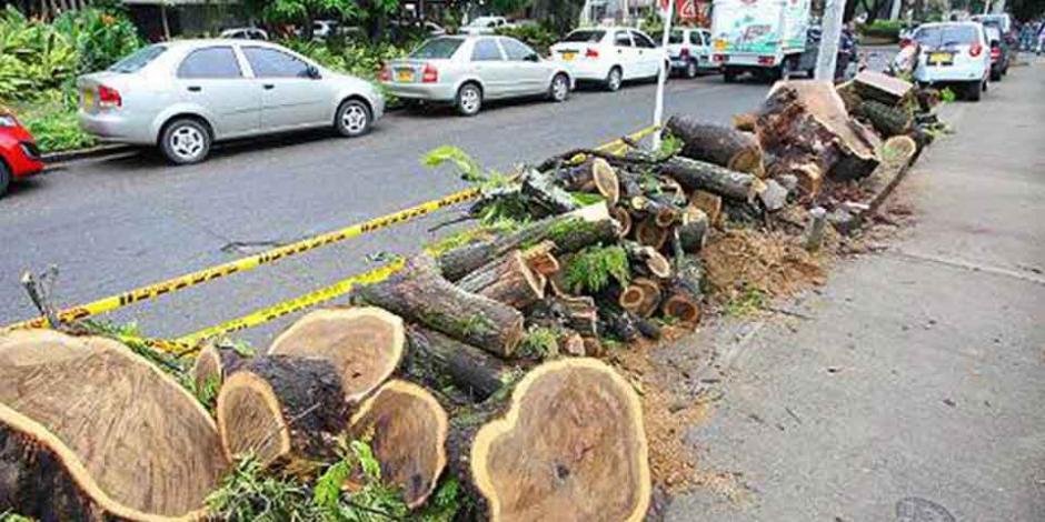 Proponen prohibir tala de árboles históricos en construcciones urbanas