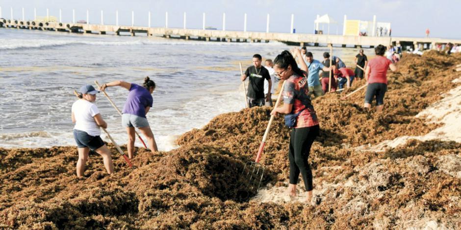 Reportan en Cancún 11 playas libres de sargazo