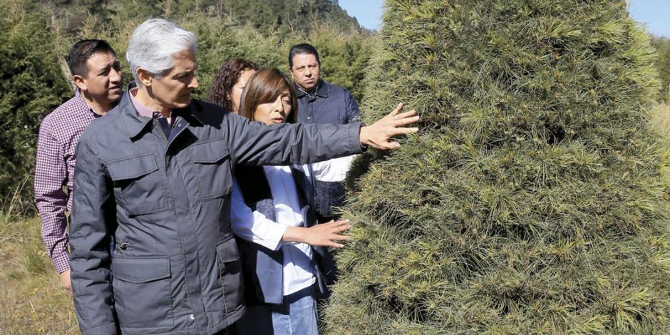 Promueven uso responsable de bosques