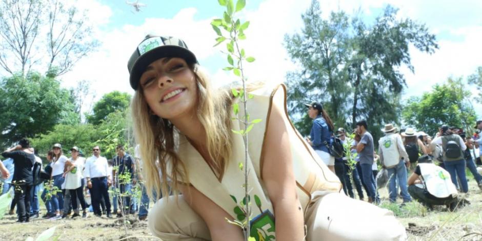 Michoacán, por el rescate de los bosques