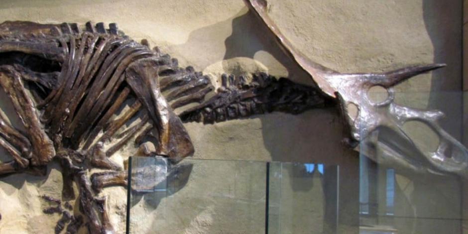 Encuentran fósiles de dinosaurio en un suburbio de Denver, EU