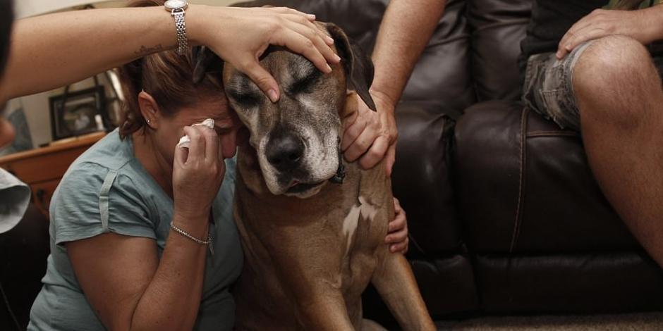 Enfermedad y muerte de mascotas, un dolor que también debe enfrentarse