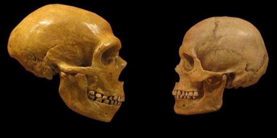 Estudio demuestra que homo sapiens y neandertales mantuvieron relaciones sexuales