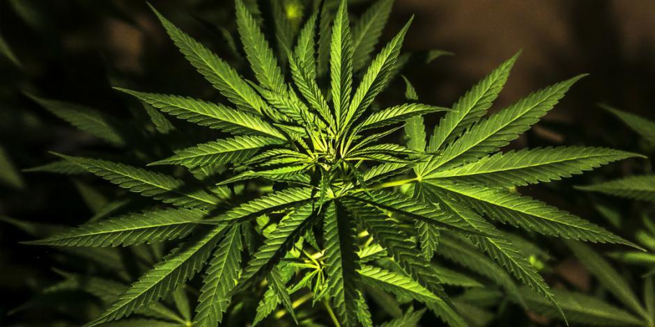 Detienen a dos colombianos por posesión de mariguana en la Del Valle