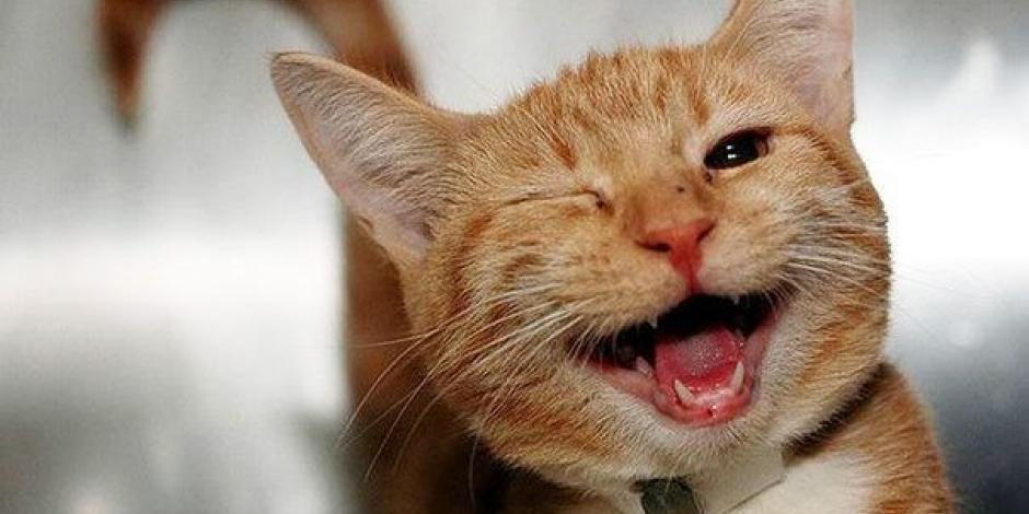 FOTO: Gatito británico lleva a casa de dueño una bolsa con drogas