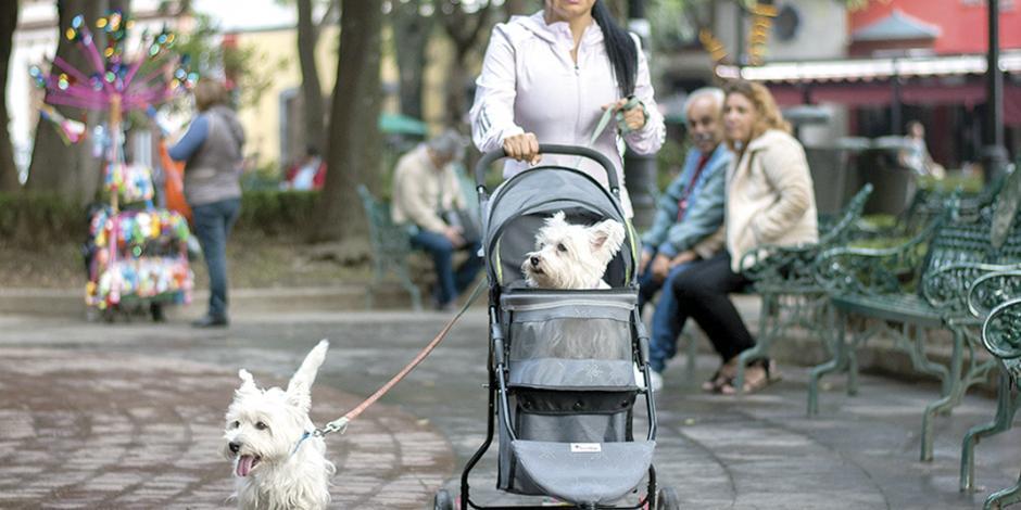 Morena propone en Congreso local que las mascotas reciban herencias
