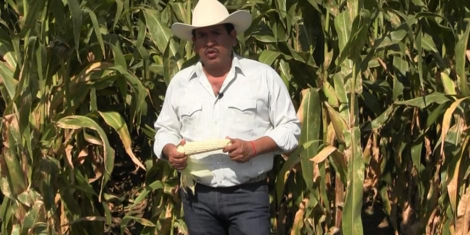Productores mexicanos piden analizar estatus de granos en T-MEC