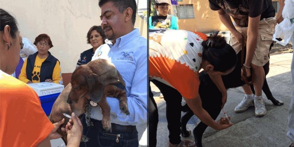 Arranca jornada gratuita de esterilización para mascotas en la BJ
