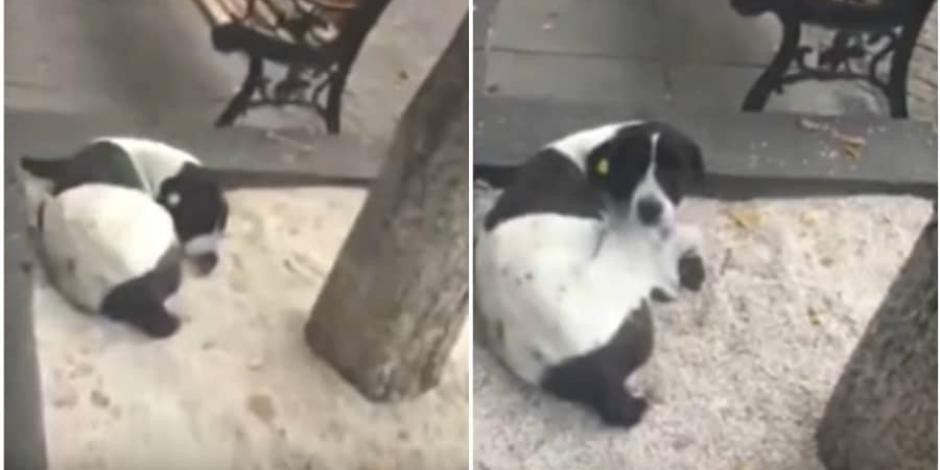 VIDEO: Hombre se reencuentra con su perro que perdió hace 3 años