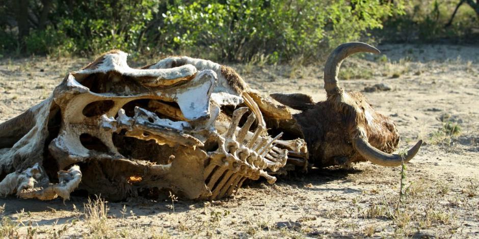 Una sequía severa afecta a Sonora