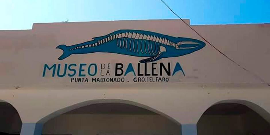 Rescatan en Guerrero el primer fósil prehistórico de una ballena barbada