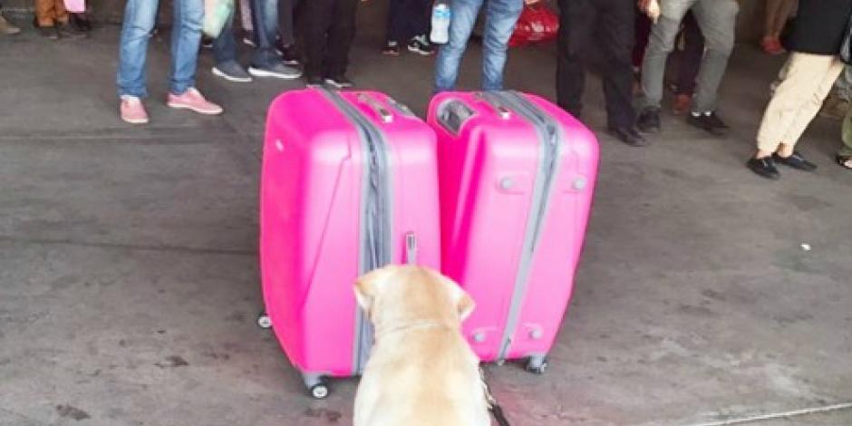 Encuentran dos maletas en Culiacán con 40 kilos de crystal