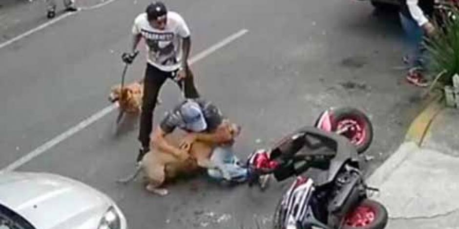 PGJ investiga ataque de perro pitbull en la CDMX