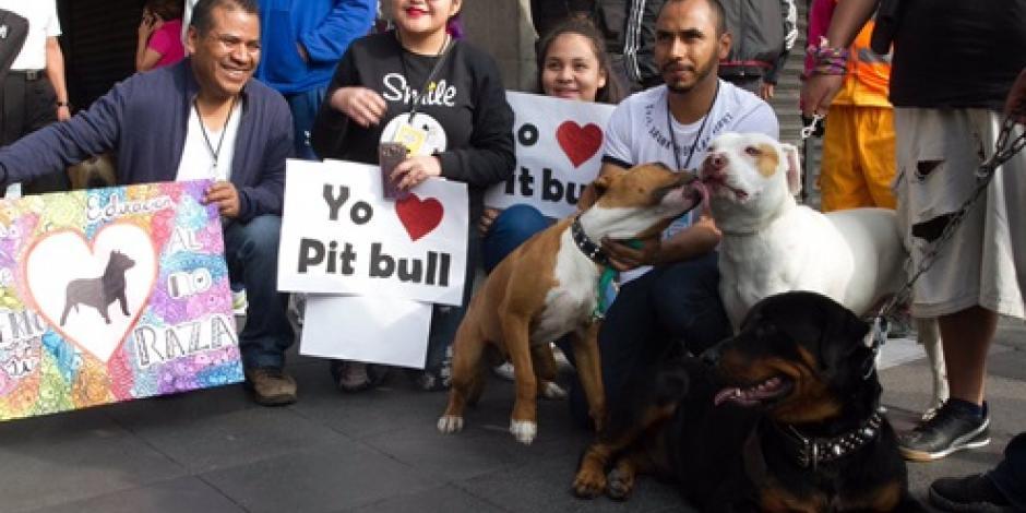 Marchan en la CDMX a favor de los perros pitbull