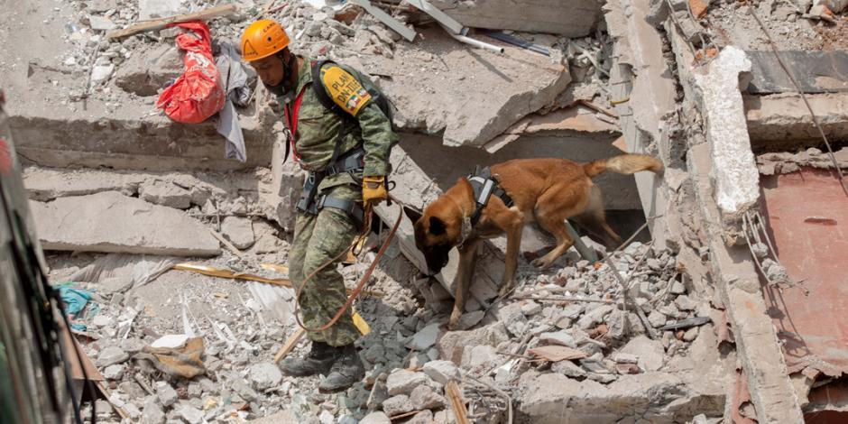 Aumenta a 239 la cifra de muertos tras sismo