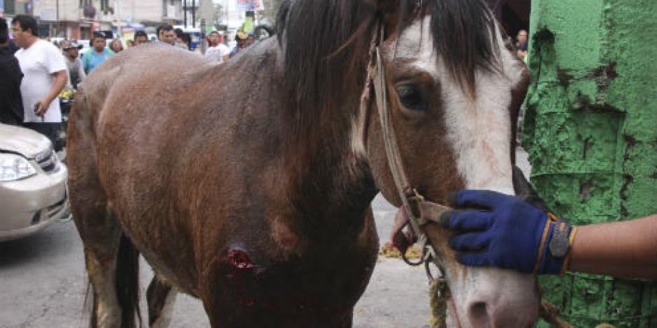 CDMX tendrá oficina especial contra maltrato animal