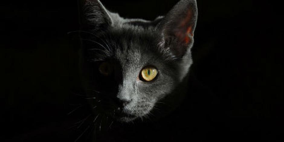 ¡Inédito! Mordida de gato podría matarte; primer caso en Japón