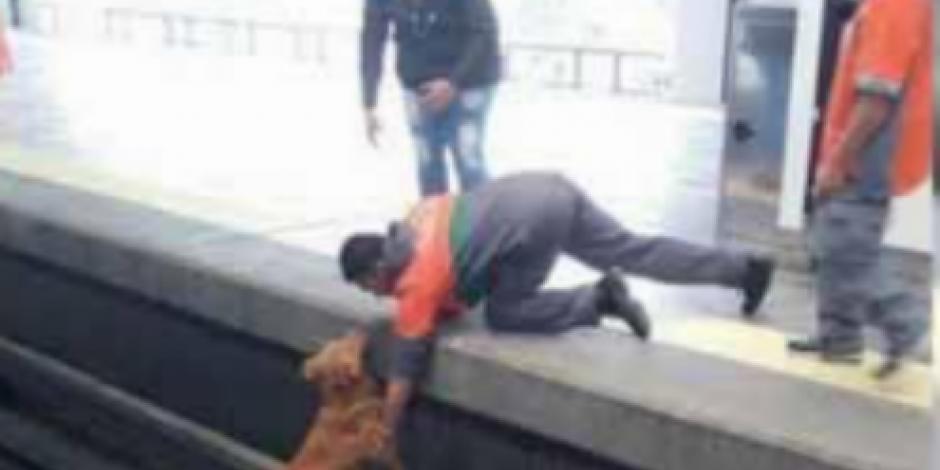 Alista Metro espacio seguro para perros