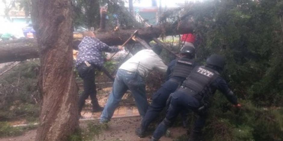 Lluvias dejan árboles caídos y vialidades inundadas en Toluca y CDMX