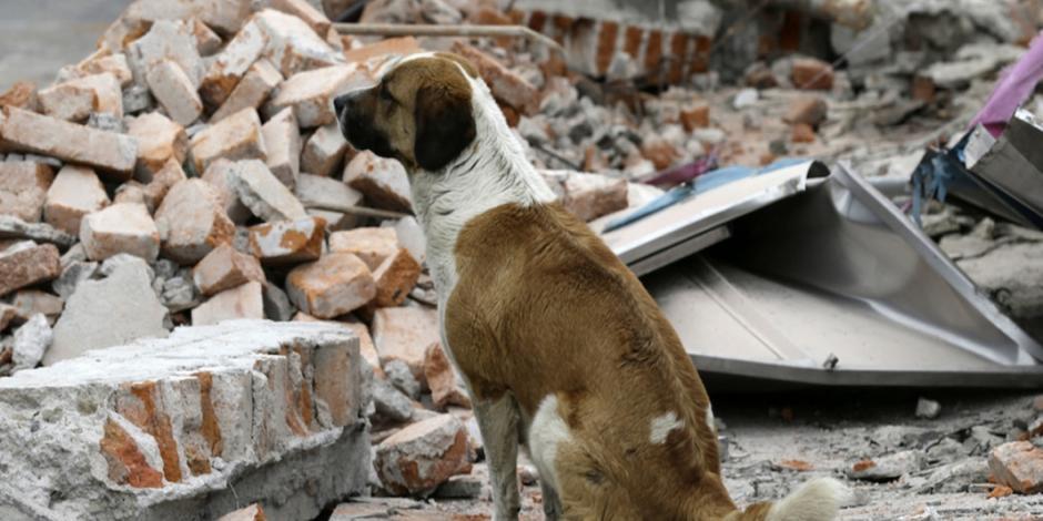 UNAM recolecta alimento para mascotas afectadas por sismo
