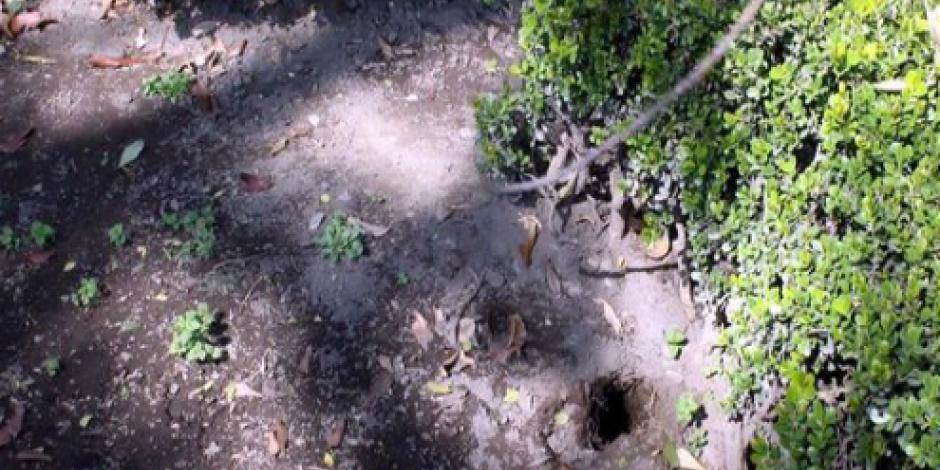 Visitantes a jardín de Coyoacán genera hasta 4 toneladas de basura en un fin de semana