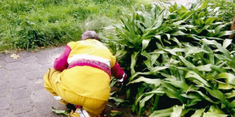 Jardín Hidalgo de Coyoacán es liberado de fauna nociva