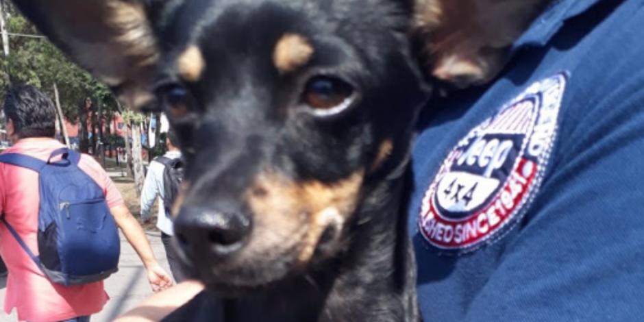 Abren albergues para mascotas, las otras víctimas del sismo