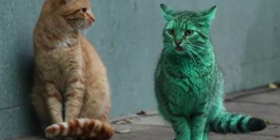 Aparece un gato verde en Bulgaria
