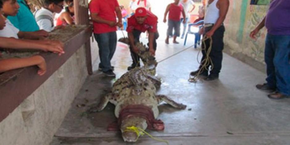 Capturan cocodrilo de más de tres metros en Guerrero