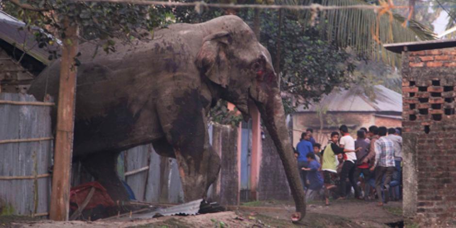 Elefanta causa destrozos en pueblo de la India