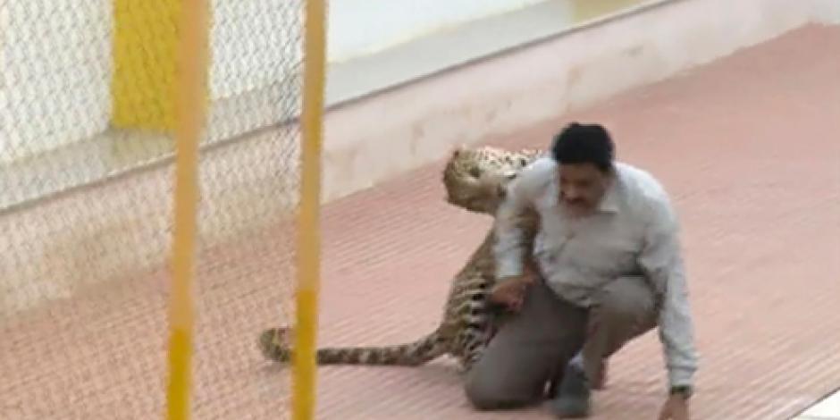 VIDEO: Leopardo hiere a 3 personas en India
