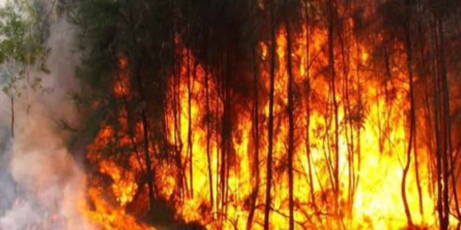 Afectadas 219 mil hectáreas por incendios forestales en tres años