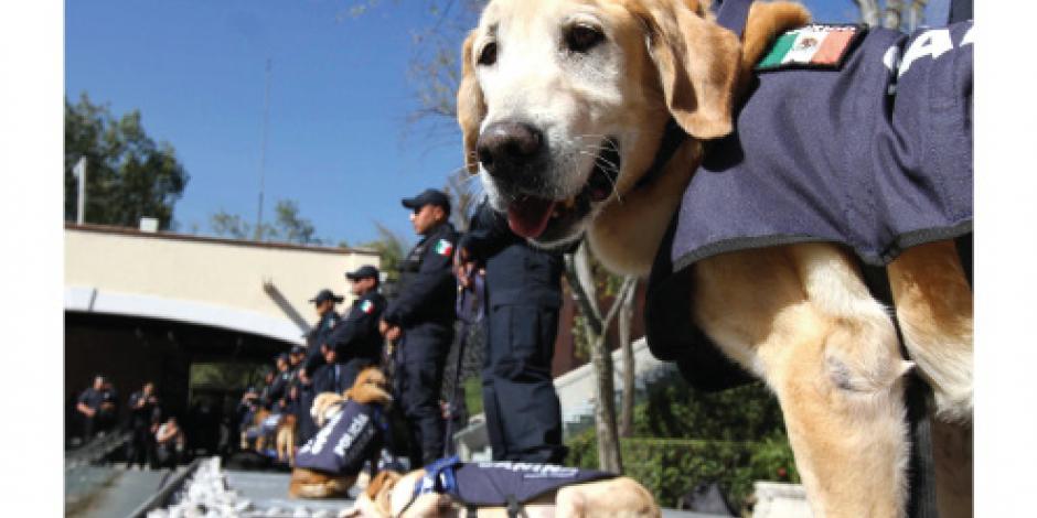 Jubilan con honores a nueve perros heroicos