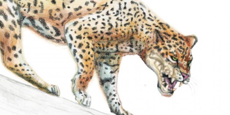 Buscan proteger a los 4 mil jaguares que quedan en México
