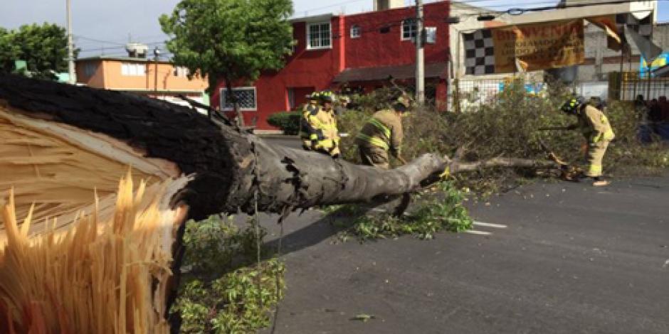 En dos días suman 510 árboles caídos por viento en CDMX