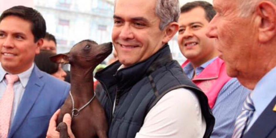 Mancera declara al perro Xoloitzcuintle como símbolo de la CDMX