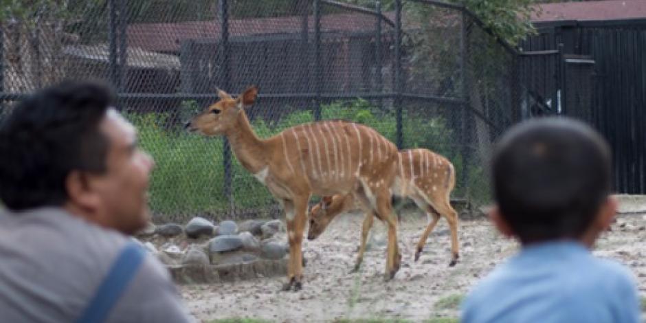 Piden trato digno de ejemplares en 67 zoológicos