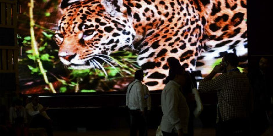 Prevén derrama económica de más de 252 mdp por COP13 en Cancún