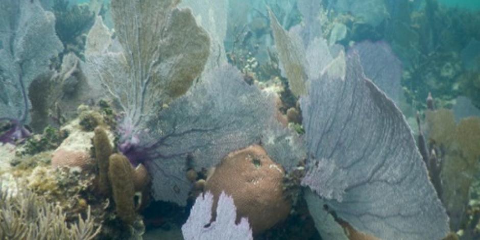 Buscan reducir contaminación con algas marinas