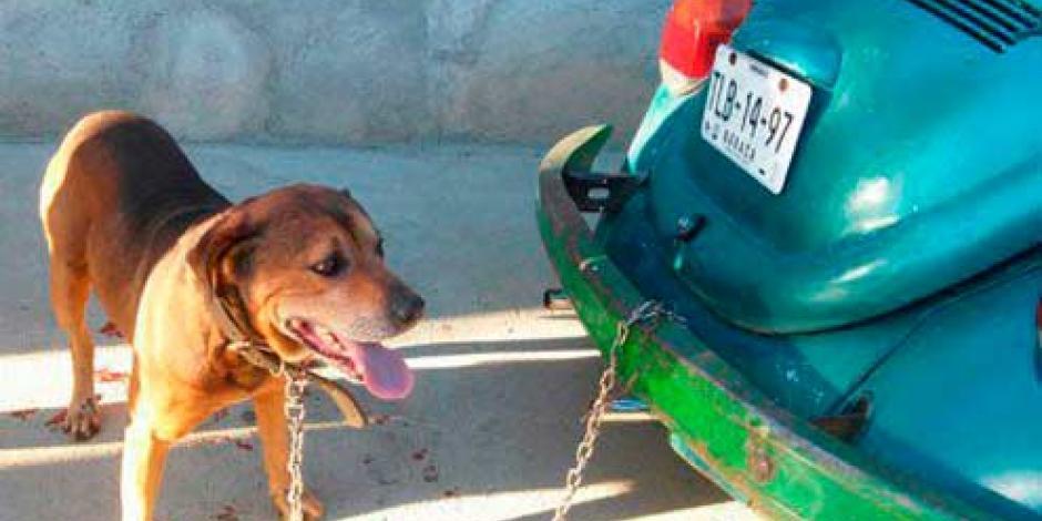 Realiza Fiscalía de Oaxaca primera detención por maltrato animal
