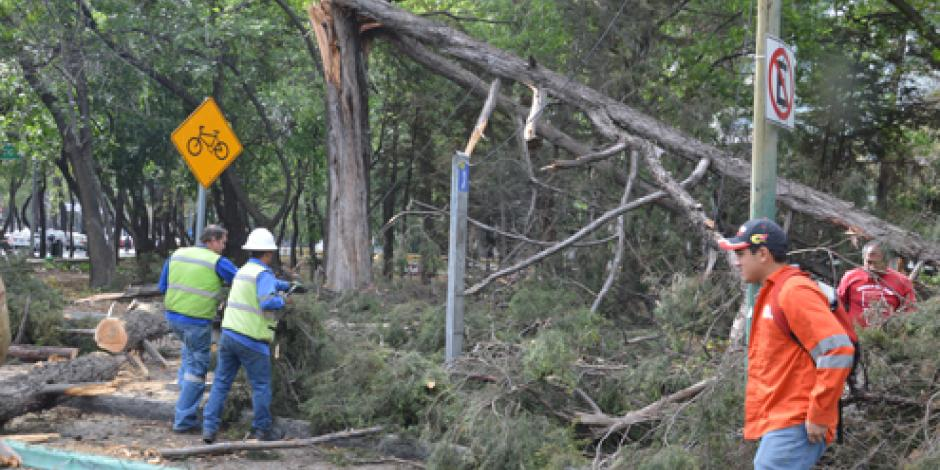 Restablece CFE servicio al 93% en estados afectados por vientos