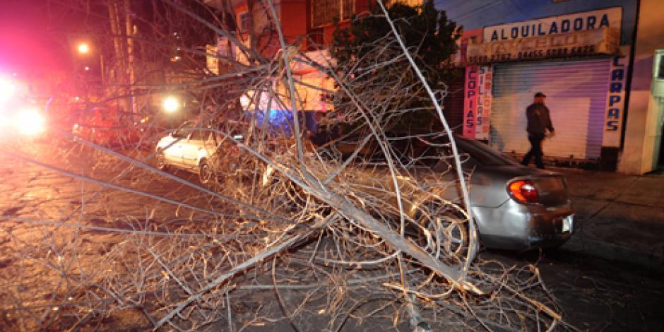 Niegan contingencia en la CDMX; vientos derriban más de 600 árboles