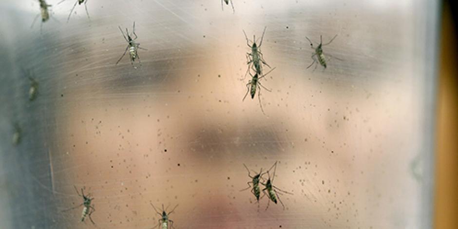 Crean ropa especial para combatir el zika
