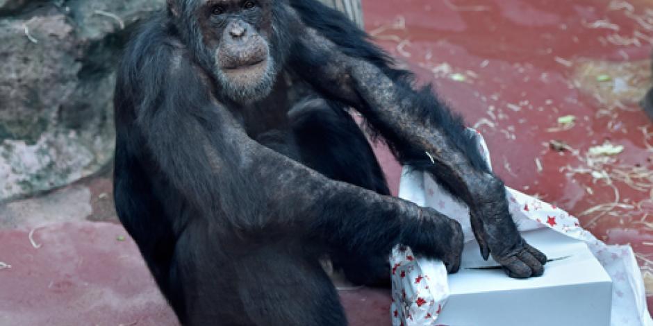 Adelantan cena y regalos navideños en zoológico alemán