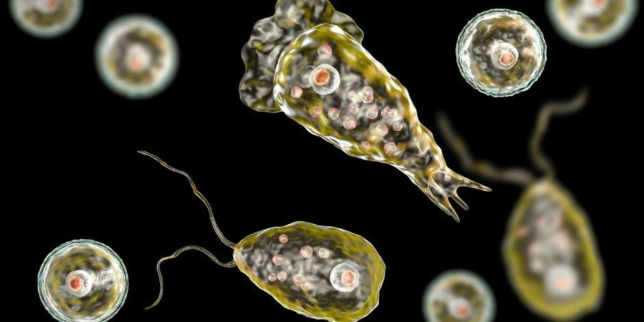 Naegleria fowleri-ameba