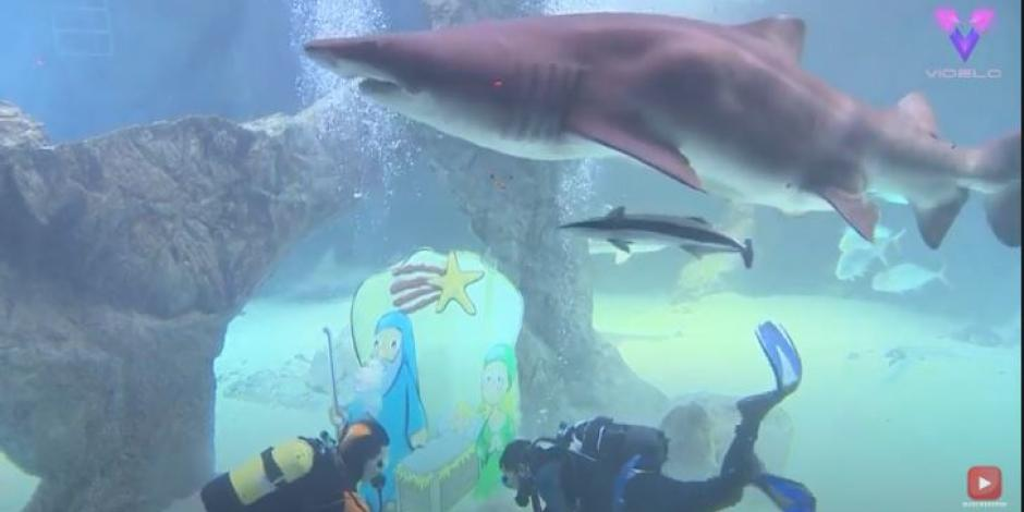 tiburones2