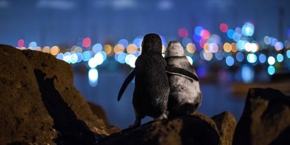 foto pinguinos