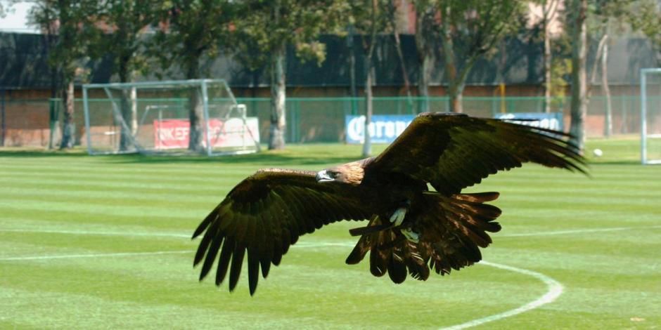 América festeja día internacional del águila real