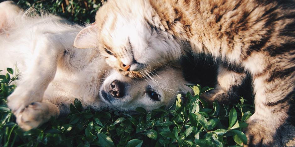 Perros y gatos envenenados